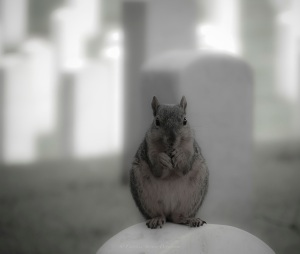 Cemetery Squirrel_Sig copy