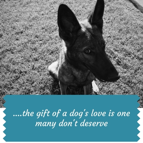 the gift of a dog's love is one many don't deserve