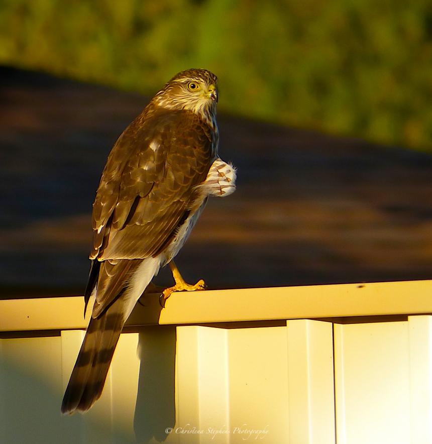 backyard-visitor-sig