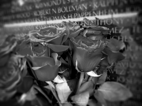 silence-of-a-roses-remembrance-bw-sig