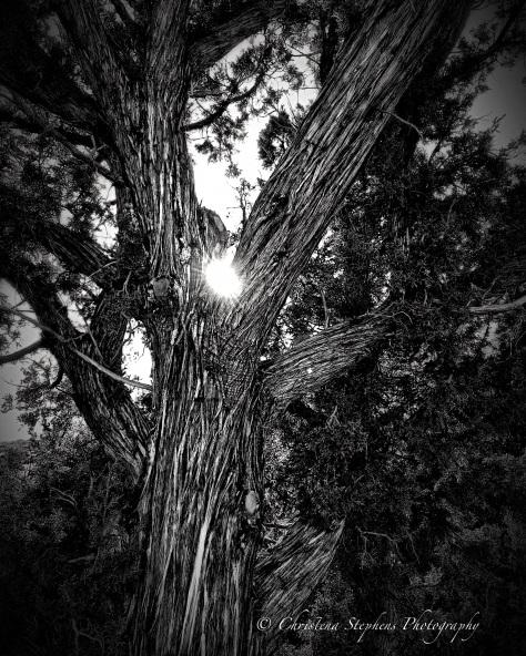 juniper-sig