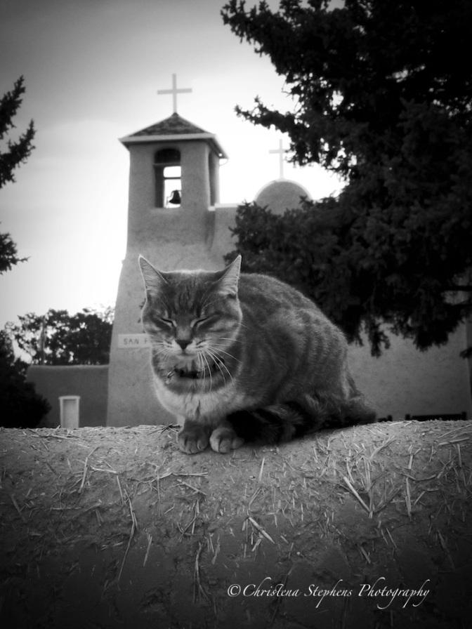 Praying Cat at San Francisco de Assisi Mission Church