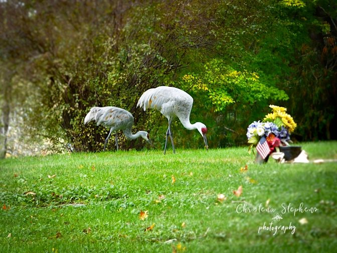 In Place of Concrete Angels Were Sandhill Cranes