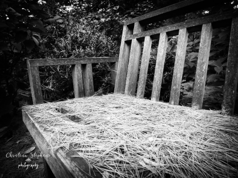Talking Bench-Madison-ExposureB&W 2-imp