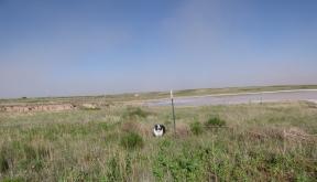 Dog and Dirt Muleshoe May 2019